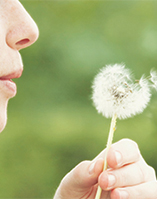 A photo of someone blowing a dandelion